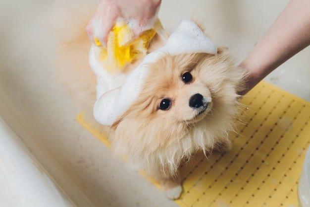 Como dar banho