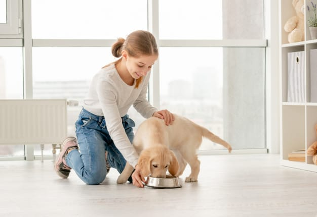 Alimentação de cães