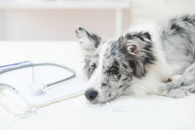 Dor e inflamação nos cachorros