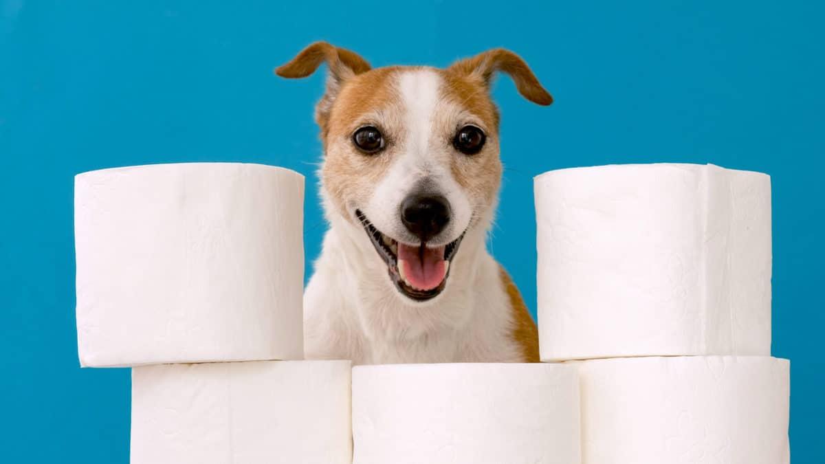 Coprofagia em cães: O que é, como funciona e quais as causas?