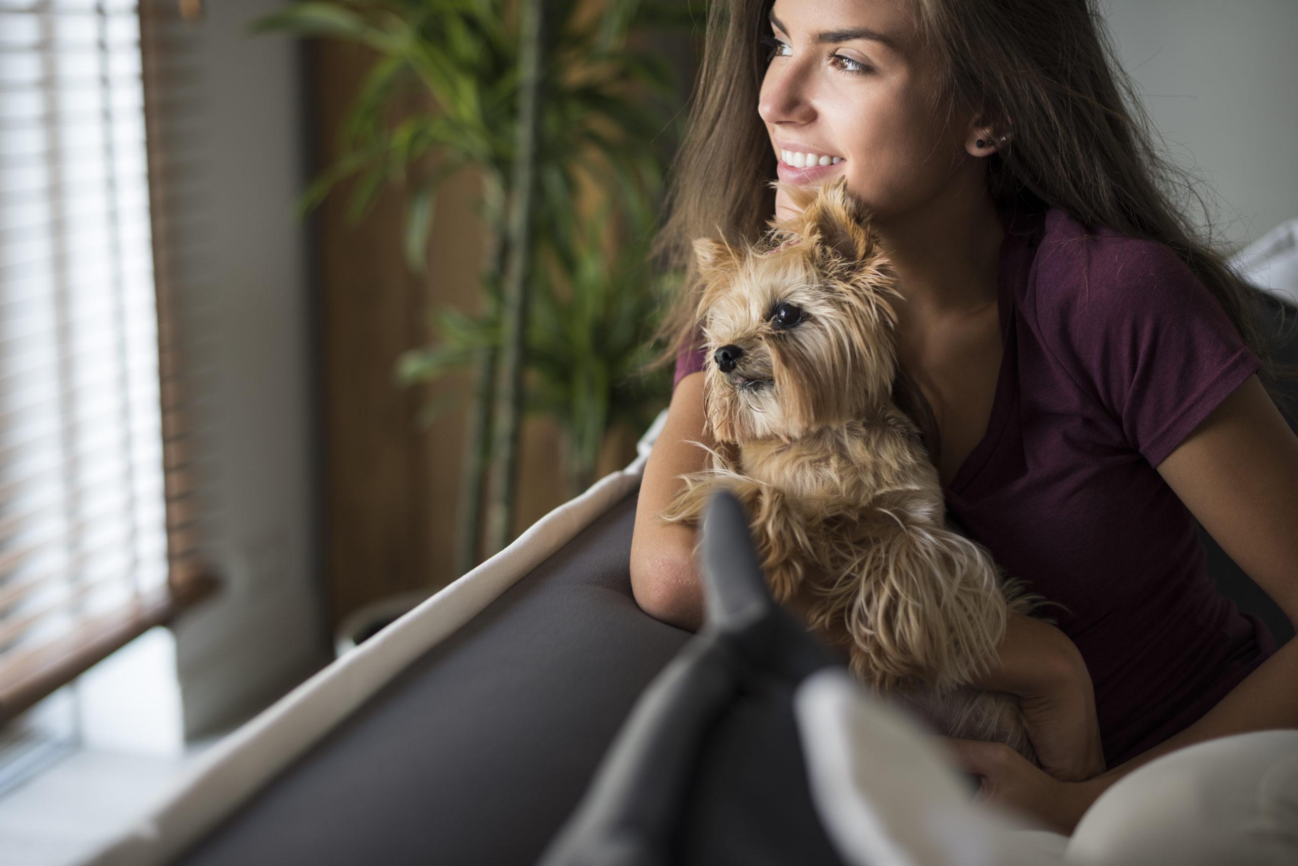 Cães de companhia: conheça as 13 melhores raças