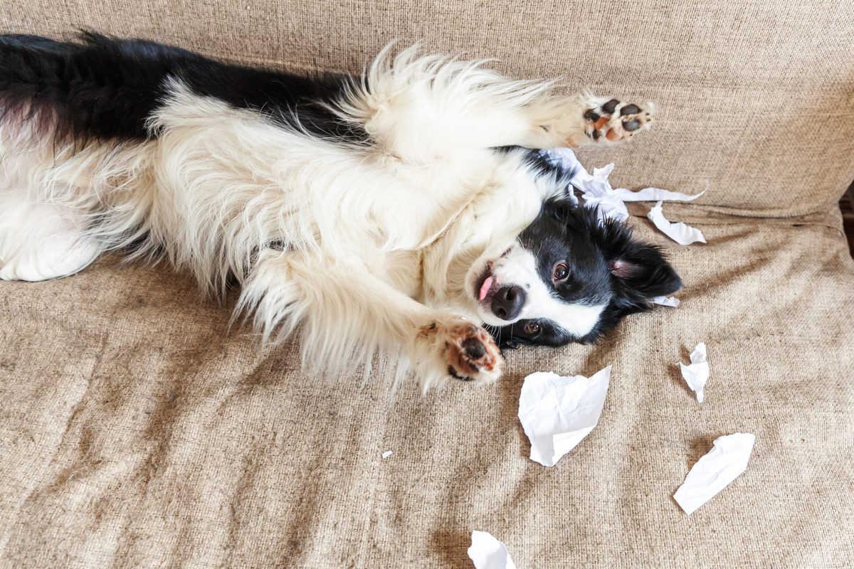 Como lidar com cães bagunceiros? Veja o que fazer!