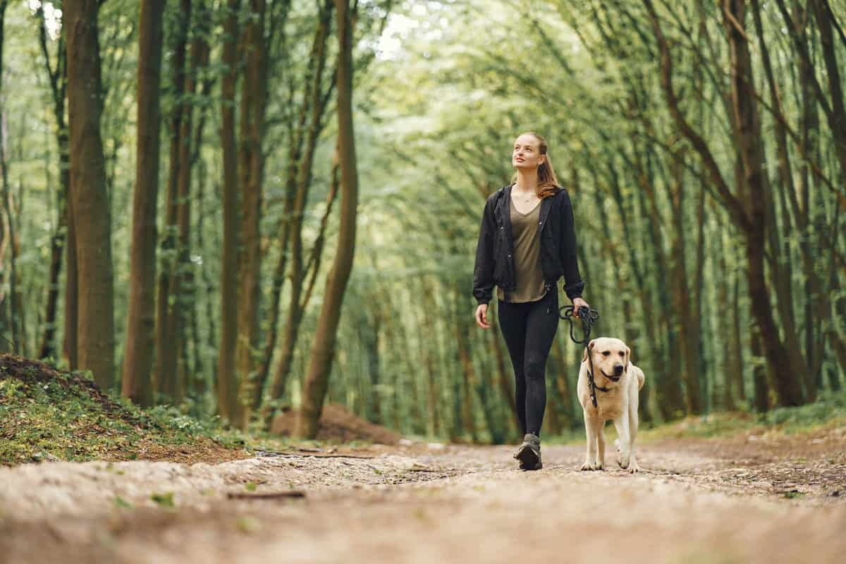 Conheça as 10 raças de cães mais atletas e como cuidar