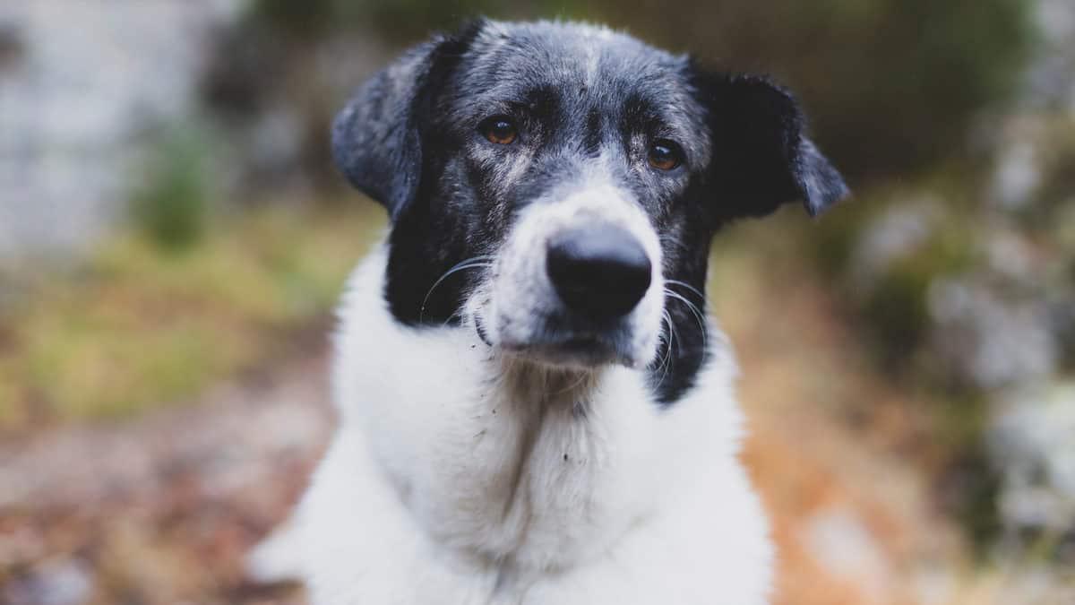 bigode do cachorro