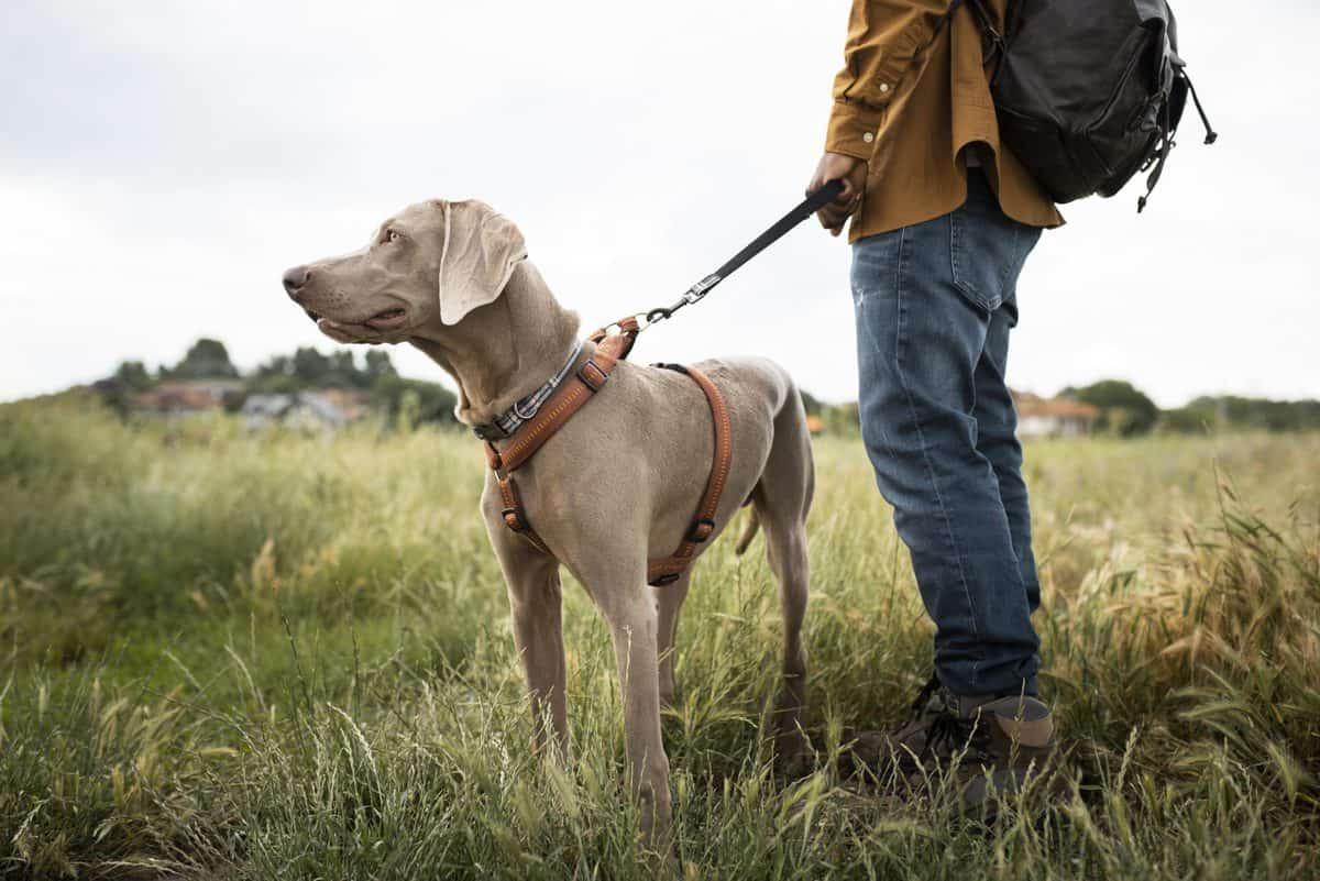 Vai viajar e não sabe se vai levar seu cão? Veja o que fazer!