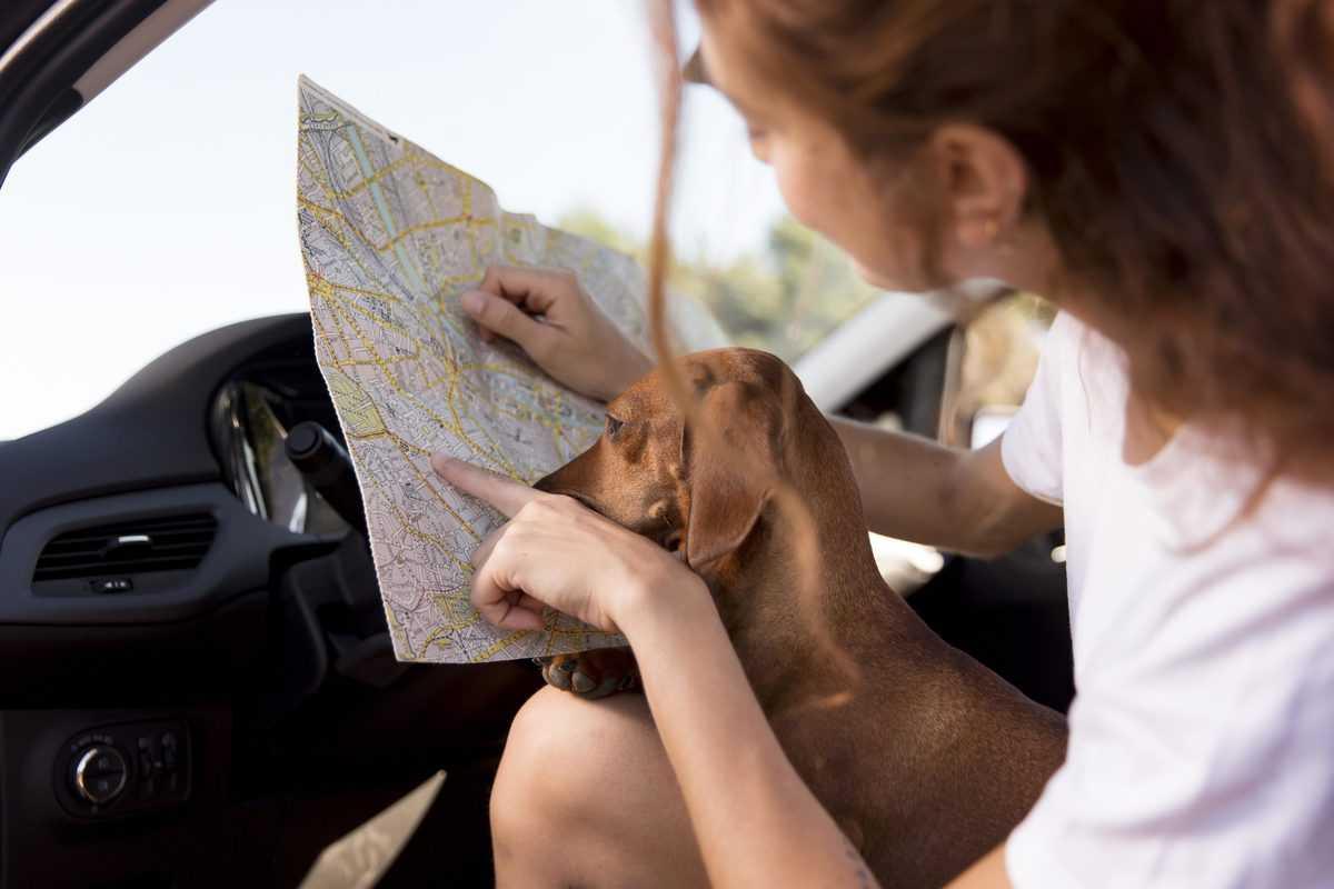 levar seu cão